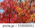 愛媛県大洲市稲荷山公園の紅葉 53808001