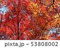 愛媛県大洲市稲荷山公園の紅葉 53808002