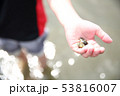 潮干狩りを楽しむ子供 53816007