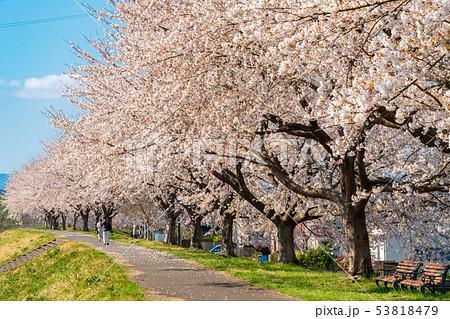 一目千本桜と男女 宮城柴田 53818479