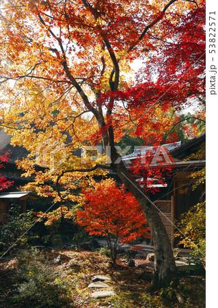 11月 京都の紅葉の直指庵 53822571