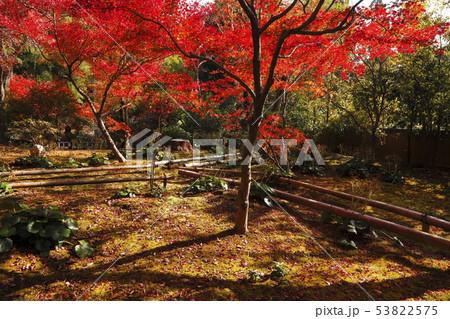 11月 京都の紅葉の直指庵 53822575