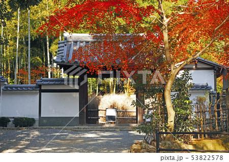 11月 京都の紅葉の直指庵 53822578