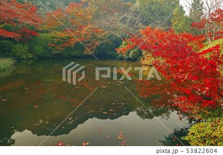 11月 紅葉の長岳寺-大和の秋景色- 53822604