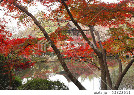 11月 紅葉の長岳寺-大和の秋景色- 53822611
