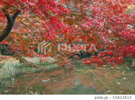11月 紅葉の長岳寺-大和の秋景色- 53822613