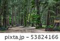 枝 森林 林の写真 53824166