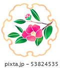 雪輪 花 植物のイラスト 53824535