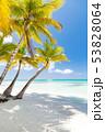 ビーチ ヤシ 樹木の写真 53828064