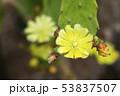 植物 多肉植物 サボテンの写真 53837507