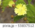 植物 多肉植物 サボテンの写真 53837512