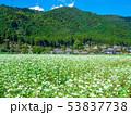 蕎麦の花と美山かやぶきの里 53837738