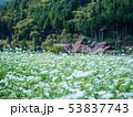 蕎麦の花と美山かやぶきの里 53837743