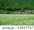 蕎麦の花と美山かやぶきの里 53837747