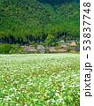 蕎麦の花と美山かやぶきの里 53837748
