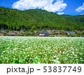 蕎麦の花と美山かやぶきの里 53837749