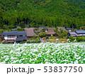 蕎麦の花と美山かやぶきの里 53837750