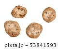 Solanum tuberosum じゃがいも  53841593