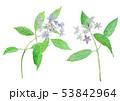 山紫陽花 額紫陽花 ハイドランジアのイラスト 53842964