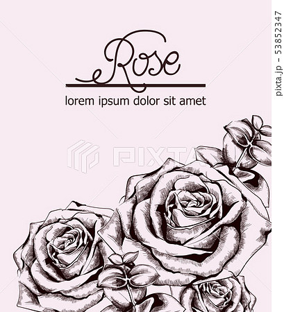 Vintage Roses Card Vector Line Art Boho Styleのイラスト素材