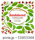 sandalwood vector set 53853368