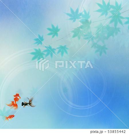 背景-和-和風-和柄-和紙-金魚-紅葉-夏-祭り-水色 53855442