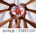 Human Heart Group Support 53857135