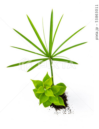 Concept of growing from plant on white background 53863011