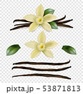 Vector 3d Realistic Sweet Scented Fresh Vanilla Flower with Dried Seed Pods and Leaves Set Closeup 53871813