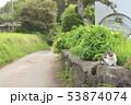 小道の猫ちゃん 53874074