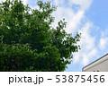 青空と新緑 53875456