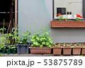 家庭菜園 53875789