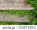 庭の花 53875831