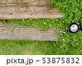 庭の花 53875832