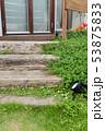 庭の花 53875833