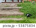 庭の花 53875834