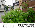 庭の花 53875835
