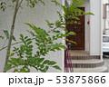 玄関と庭木 53875866