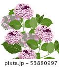 紫陽花2 53880997