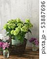 山紫陽花 ヤマアジサイ 53887696
