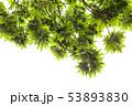葉 緑 樹木の写真 53893830