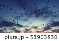 Birds flying in a circle in the troubled sky. 3D Rendering 53903830