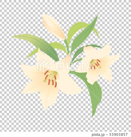 ユリの花 53903857