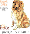 dog Rough Collie breed vector 53904038