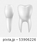 Vector 3d Realistic Render White ToothIcon Set Closeup Isolated on Transparent Background. Dental 53906226