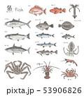 魚 種類 水彩のイラスト 53906826