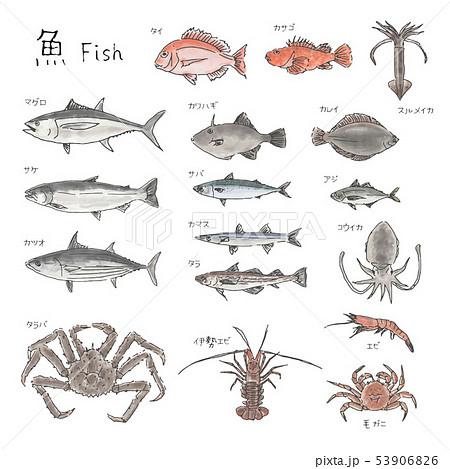 市場の魚 種類いろいろ 水彩風イラスト 53906826