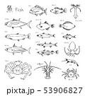 魚 種類 白バックのイラスト 53906827
