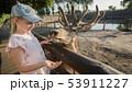 A child feeds a cute deer near the fence 53911227