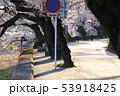 長良川沿いの桜並木 53918425